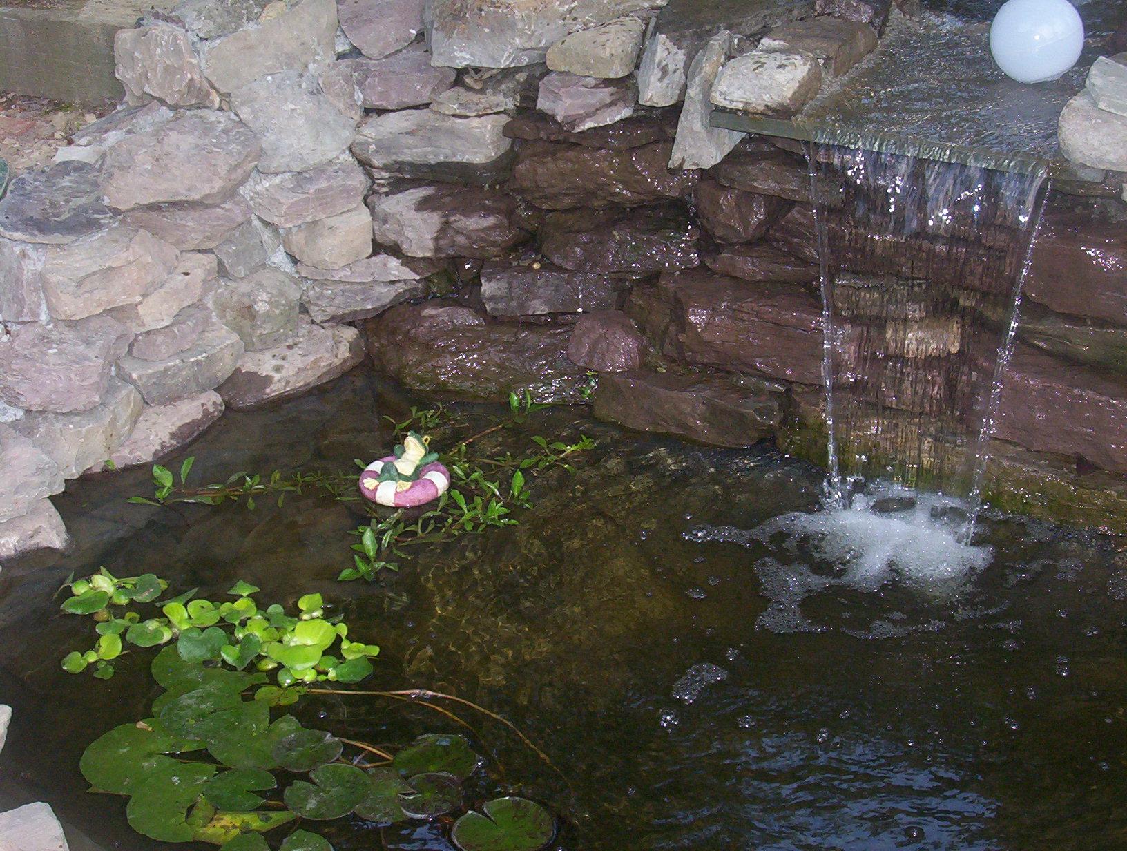 Index Of Afs Cs Usr Reids Www Fish Pond