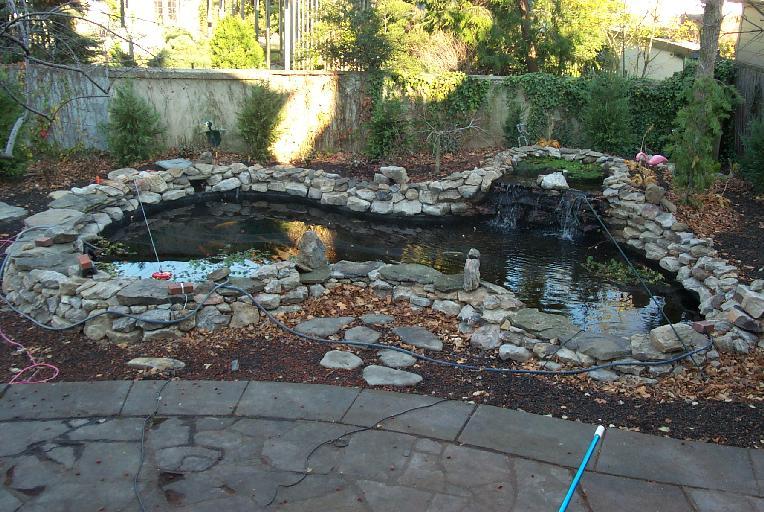 Backyard Koi Pond Ideas : Jessica Hodgins Photo Bio