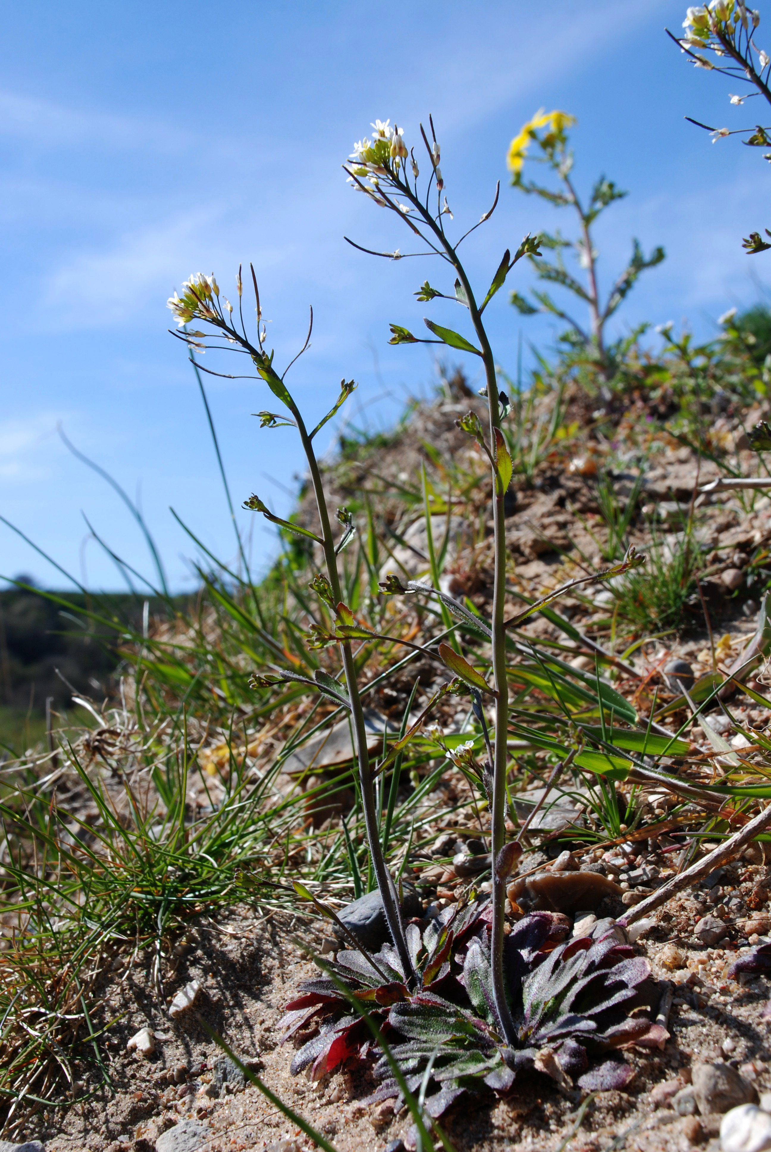 Molecular Conductors Help Plants Respond To Drought